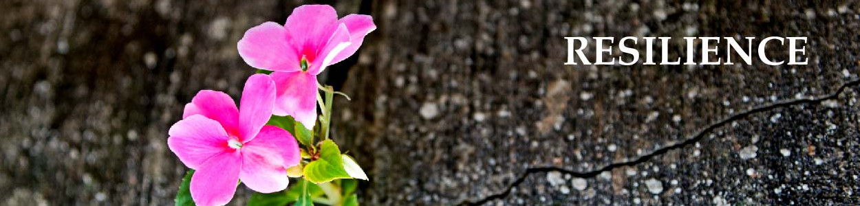Pink flower blooming through a crack in the concrete with the word resilience